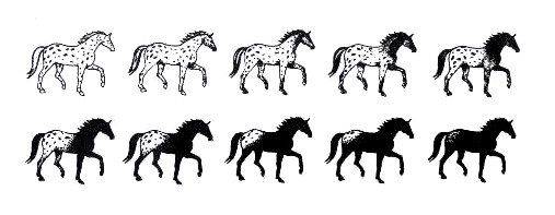 Coat patterns for horses that are heterozygous for LP (LP/lp